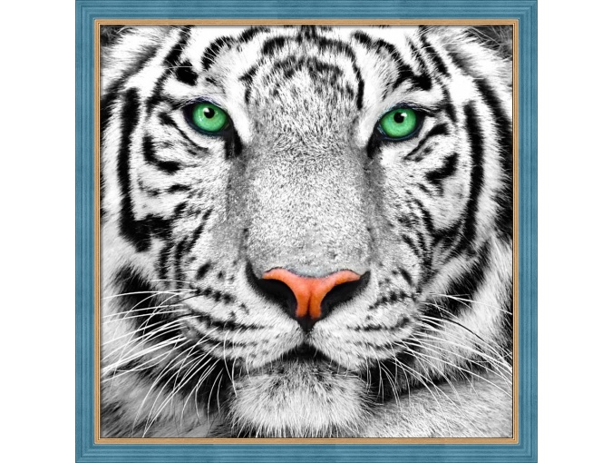Portrait of a White Tiger Diamond Painting Kit фото 1