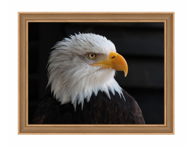 Bald Eagle Diamond Painting Kit фото 1