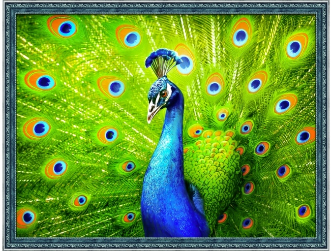 Handsome Peacock Diamond Painting Kit фото 1