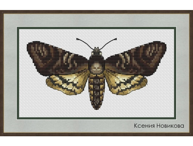 Sphingidae Cross Stitch Pattern фото 1