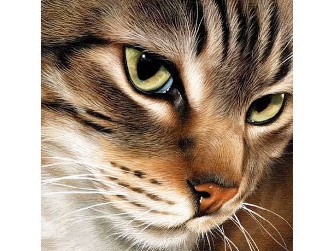 Mysterious Cat Diamond Painting Kit фото 1